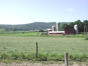 Dairy farm near , July 2001