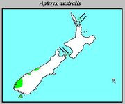The distribution of Apteryx australis