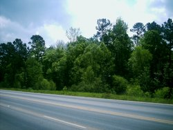 The Piney Woods viewed from Loop 390 outside of